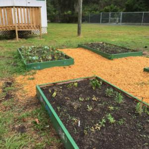 Kate Sullivan school gardens